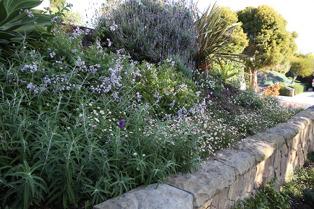 Cottage Garden 6