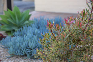Mesa Adobe Garden 1