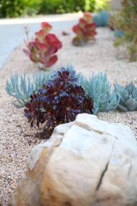 Mesa Adobe Garden 5