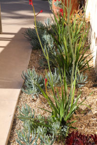 Mesa Adobe Garden 6