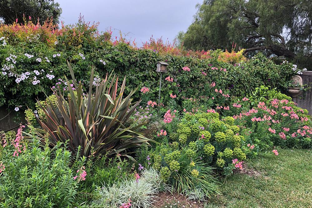 Cottage Garden 5