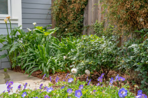 Family Friendly Cottage Garden 5